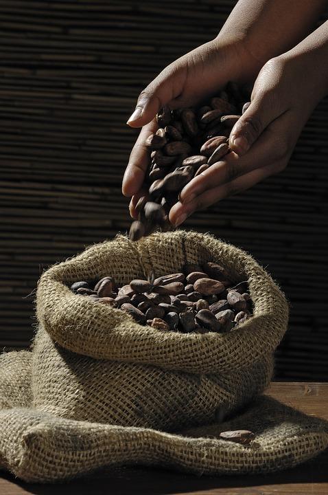 Kakao surowe uzyskuje się w procesie suszenia ziaren kakaowca.